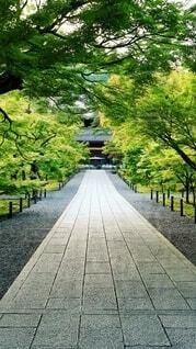 風景,屋外,京都,草,樹木,石畳,道,歩道,地面,寺,草木,パス
