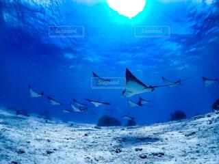 空飛ぶ魚の写真・画像素材[4630608]
