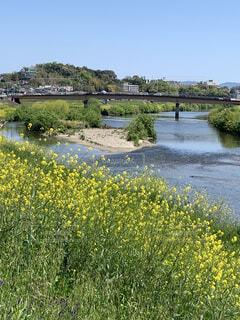 自然,風景,空,花,屋外,川,水面,池,草,樹木