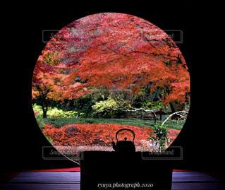 鎌倉の絶景 〜紫陽花寺で見れる丸窓の絶景〜の写真・画像素材[4617796]