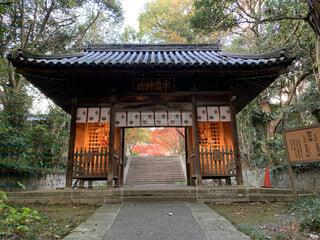 秋,屋外,神社,樹木,地面,寺,ポーチ