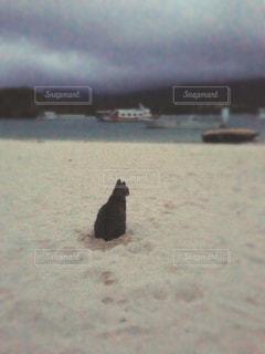 猫の写真・画像素材[205135]