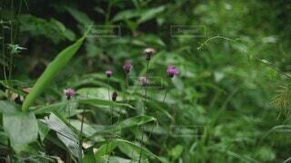 花,夏,屋外,緑,晴天,登山,草,樹木,蝶,草木,フローラ