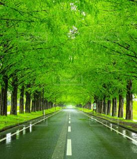 長い緑の草の写真・画像素材[4617164]