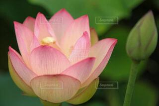 花のクローズアップの写真・画像素材[4617155]