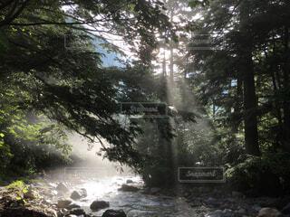 夏,森林,川,水面,影,木漏れ日,登山,旅行,朝,長野,槍ヶ岳,上高地,梓川,朝の日差し