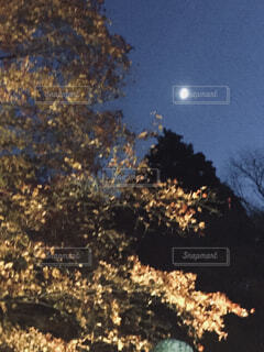 空,秋,夜景,紅葉,屋外,シルエット,樹木,月,旅行,寺院,滋賀県,草木,湖東三山,湖東