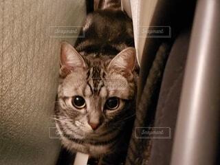 猫,動物,屋内,黒,子猫,ネコ科,探す