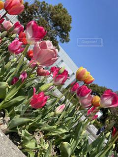花,花束,散歩,草木
