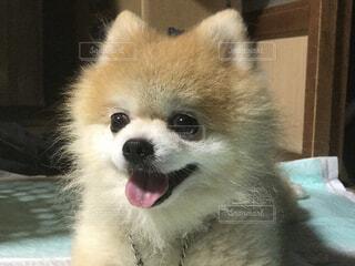 何かを見つめる愛犬の写真・画像素材[4615920]
