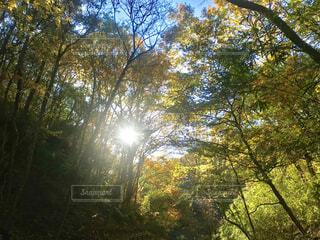 空,秋,森林,木,屋外,太陽,森,緑,葉,日光,木漏れ日,樹木,草木