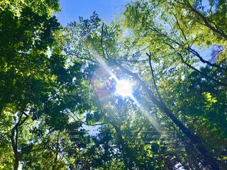 自然,風景,空,夏,森林,木,屋外,太陽,暑い,葉,日光,景色,影,木漏れ日,樹木,明かり,グリーン,明るい,日陰,草木,避暑地