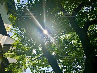 とある日の木漏れ日の写真・画像素材[4616767]
