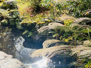 秋模様の1枚の写真・画像素材[4616822]