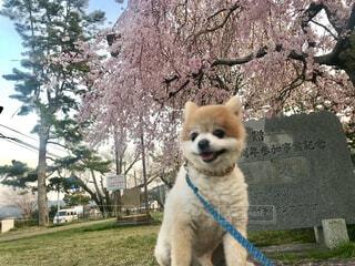 桜を見ながら休憩中の写真・画像素材[4617644]
