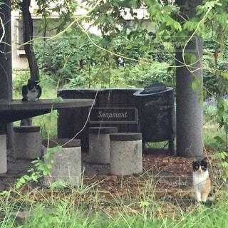 猫,公園,動物,屋外,草,樹木,癒し,草木
