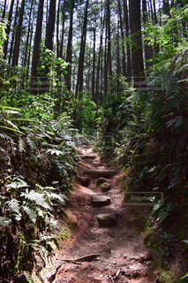 自然,風景,森林,木,屋外,樹木,地面,ジャングル,草木,熱帯雨林,原生林,パス,ウッドランド