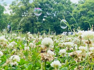 自然の中で浮かぶシャボン玉の写真・画像素材[4622256]