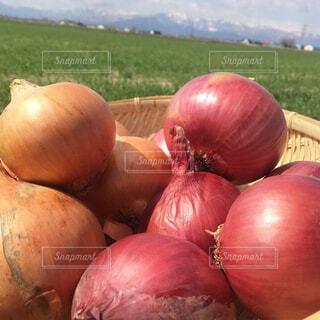 屋外,野菜,家庭菜園,農業,タマネギ,赤玉ねぎ,紫玉ねぎ,自然食品,札幌黄,地元の料理