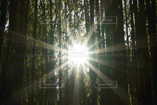 自然,田舎,木漏れ日,竹