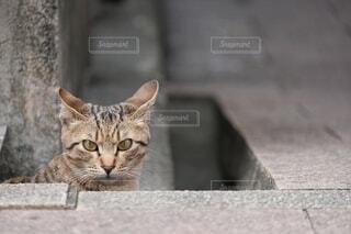 猫,動物,座る,一匹,グレー,石,裏路地,見つめる,覗く,セメント