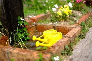花壇,草木,水やり,ジョーロ,庭先