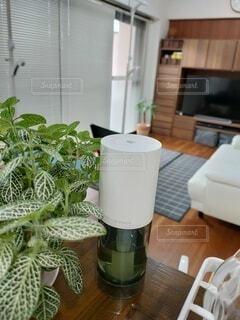 キッチン,リビング,屋内,花瓶,窓,植木鉢,観葉植物,カウンター,アロマ,ディフューザー