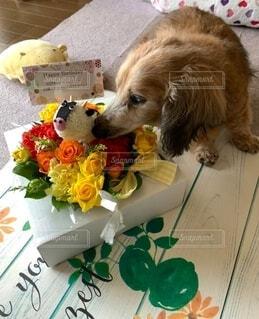 犬,花,動物,フラワー,プレゼント,愛,ミニチュアダックスフンド,ありがとう,おめでとう,お誕生日,ギフト,19歳