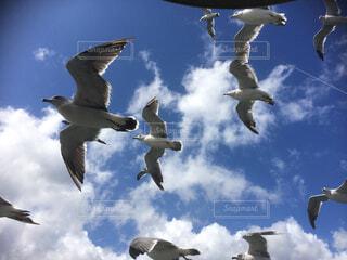 空中を飛んでいるカモメの群れの写真・画像素材[4617150]
