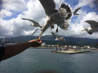 空,動物,鳥,屋外,湖,船,水面