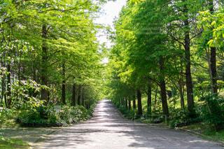 自然,空,公園,森林,屋外,樹木,草木,パス