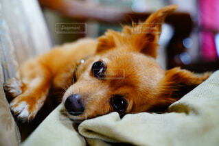 犬,動物,屋内,かわいい,景色