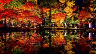 自然,風景,秋,湖,水面,葉,池,反射,草,樹木,草木,カエデ