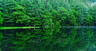 自然,風景,屋外,緑,池,反射,樹木,道,新緑,草木