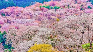 風景,空,花,屋外,池,景色,反射,草,道,新緑,カラー,草木