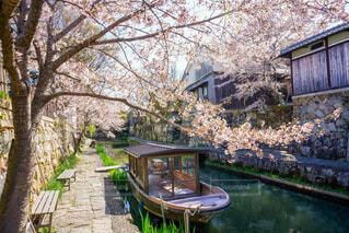 公園,花,春,屋外,湖,水面,樹木,ガーデン