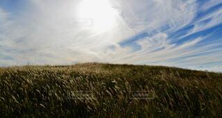自然,風景,空,屋外,雲,景色,草,立つ