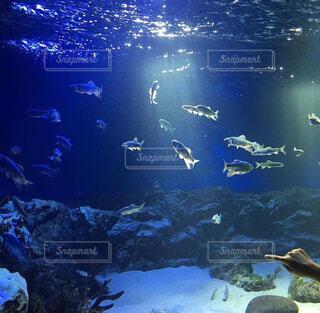 魚,熱帯魚,水族館,水面,葉,泳ぐ,水中,大学生,ダイビング