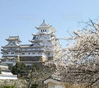 空,桜,旅行,天守閣,姫路城