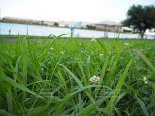 空,花,屋外,緑,草,草木