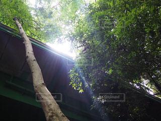 空,屋外,光,樹木,等々力,等々力渓谷
