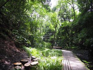 公園,森林,屋外,川,光,樹木,歩道,等々力,等々力渓谷
