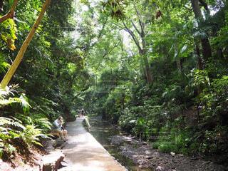 自然,風景,森林,屋外,川,樹木,歩道,地面,等々力,ジャングル,等々力渓谷,草木