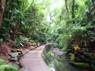 自然,風景,森林,屋外,川,水面,樹木,歩道,地面,等々力,ジャングル,等々力渓谷,草木,ガーデン
