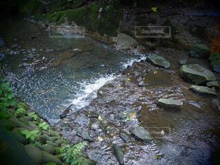 自然,屋外,川,水面,滝,等々力,運河,等々力渓谷,ストリーム