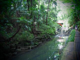 自然,風景,橋,森林,屋外,湖,川,水面,滝,草,樹木,歩道,等々力,等々力渓谷,草木