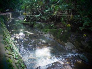自然,風景,森林,屋外,川,水面,水辺,滝,樹木,等々力,ジャングル,運河,等々力渓谷,草木,川底,クリーク,水辺の森,自然保護区,支流,ストリーム,水域,水資源,ミネラル温泉,アロヨ,河川地形
