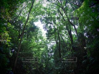 自然,風景,空,森林,屋外,樹木,等々力,ジャングル,等々力渓谷,草木