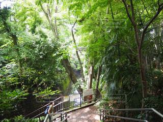 自然,屋外,樹木,等々力,ジャングル,等々力渓谷,草木