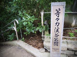自然,屋外,樹木,地面,観葉植物,手書き,等々力渓谷,草木